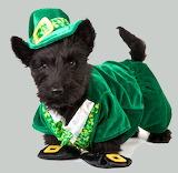 Scottie-dog-st patricks day-costume