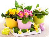 Primula Rabbits Multicolor Clothespin Flowerpot 542181 1358x1024