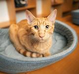 A Cat in a Cat Bed