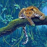 ☺ Leopard...
