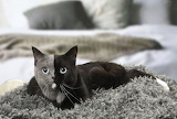 Pretty Gray & Black Kitty