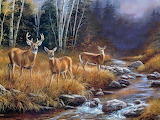 forest ROE deer picture animals stream nature
