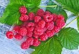 Raspberry Berry Foliage