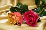 Two Lovely Roses 🥀