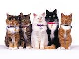 Fancy Felines...