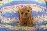 Plushy-dog-in-bed-