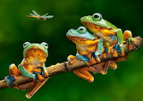 three frogs and dragonfly