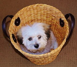 Cute Puppy in a Basket