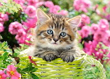 Kitten-in-flower-garden