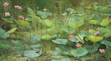 Joke Frima lotus