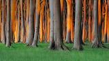 Nienhagen Wood Germany