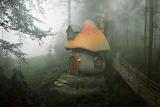 Mushroom-