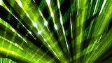 Radiant Palm Leaves