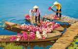 Water Lily Harvest