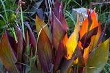 Plant-3835
