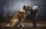 El niño y el perro