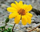 Flor amarilla2