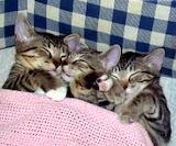 Sleeping, Sleeping, & Sleeping
