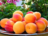 Colorful Apricots From Gilgit-Baltistan Northern Pakistan