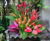 ^ Red & yellow heliconias, red ginger flowers, red heliconias, r