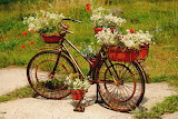 Bicycle-flower-planter-1
