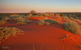 Red-dunes,-Simpson-Desert, Australia