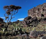 Brazilië Roraima Landschap