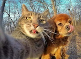 Cat and dog after snack selfie
