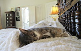 Hemingway Cat Naps on Hemingway's Bed