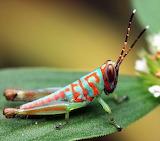 beautiful cricket