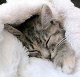 Toasty Kitten