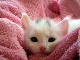 Cozy kitten