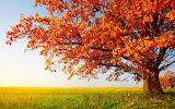 ☺ Autumn colours...