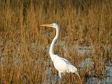 BirdEvergladesNationalPark