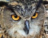 Winning Environmental Photo of an Owl