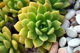 #Succulent