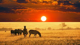 African Sunset Wildlife Zebras