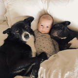 2 Dogs and a Baby