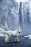 WM Horse 25