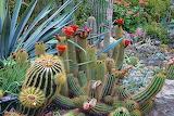 Las-Vegas-Landscape-Designs