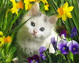 Kitten & flowers