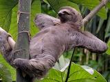 Sloth Named John