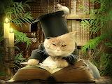 Study cat