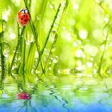 ☺ Nature...