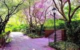 #Purple Blossoms Conservatory Garden Central Park
