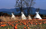 Pumpkin Patch and Tee Pees