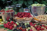 Berry-Harvest