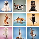 Dog Yoga Collage