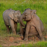 ☺♥ Playful baby elephants...
