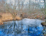 Swamp, pond, water, forest, trees, nature, winter